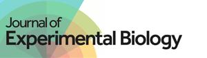 Journal of Experimental Biology logo