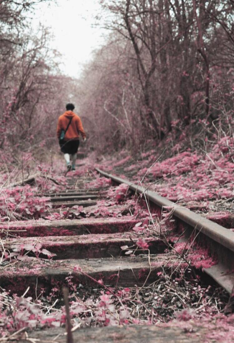 Pink by Kole Smith